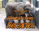DVD Cover: TULUBA - große Ohren ganz klein